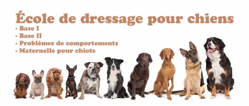 Dressage Pour Chien. Top Cours De Dressage Pour Chiens A