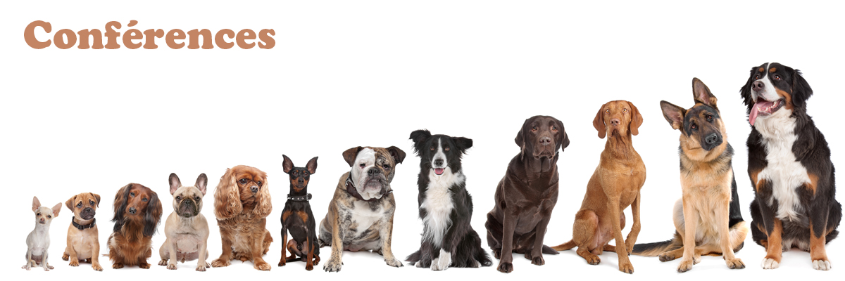 dressage chiens québec conférences