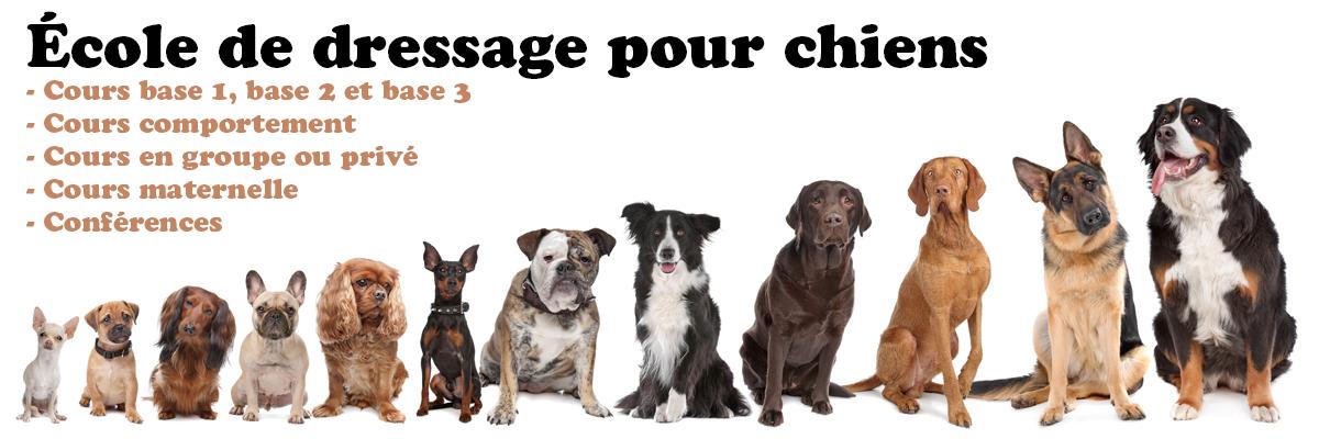 École de dressage pour chiens ville de Québec